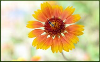 Tiny Nectar Collector