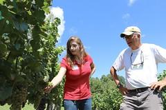 File397 (UGA CAES/Extension) Tags: grapes ugaextension cranecreekvineyards wine viticultureteam viticulture northgeorgiavineyards vineyards vines georgiawine uga