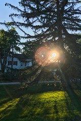 Jun 07, 2017: Sunset through the trees (jillofarttrades) Tags: sunset tree pine iphone7 outside green summer path