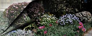Cape Spring Garden