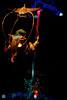 The Bird Who Sings Words (Mr__Twitchy) Tags: adventureland anaheim disneyland disneylandresort enchantedtikiroom indianajones junglecruise orangecounty southerncalifornia themepark tourism travel waltdisney california unitedstates