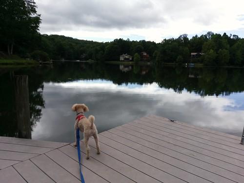 Morning, lake.