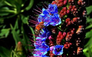 HONEY BEE FLOWER MAGNET