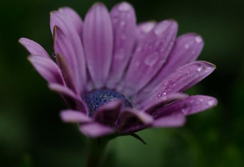 Rainy mornings 1 ©  Still ePsiLoN