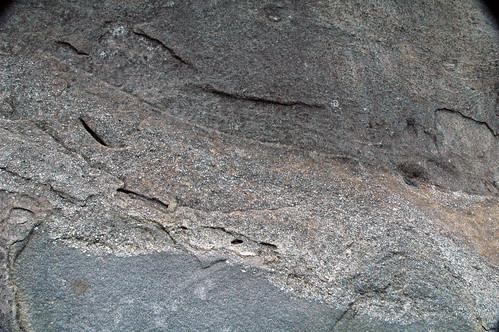 Thunderhead Sandstone (Neoproterozoic; Clingmans Dome, Great Smoky Mountains, North Carolina, USA) 7