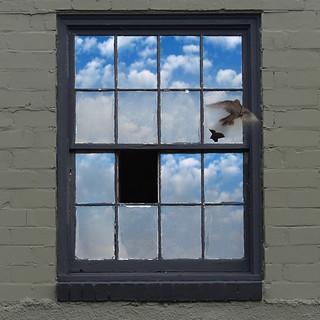 window breaks, becomes bird