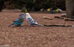 Secret Meeting (SMPhotos2548) Tags: birds bird canary meeting secret talking nj newjersey turtlebackzoo zoo sanctuary