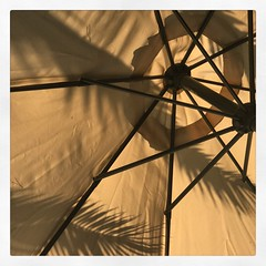 (baptisteflageul) Tags: españa espagne spain ete summer verano palmiers palmtrees palmeras pins pines pinos parasol ombre shadow sombra beachumbrella