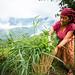 The elderly woman in the village of Nalma, Lamjung, Nepal.