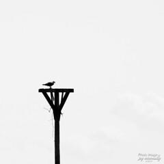 Nesting Plarform (Jay Mac 3) Tags: connecticut oldlyme topazbweffects ferrylandingstatepark
