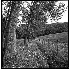Following The Soul Furrows (film) (miskin69) Tags: hasselblad mediumformat square zeiss distagon40 film ilford panf50 distagon monochrome 6x6 analog