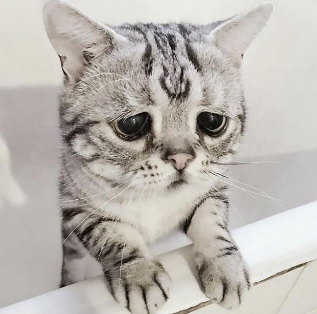 Nhìn bộ mặt buồn thiu như mất sổ gạo của boss mèo đáng yêu, con sen nào cũng muốn ôm lấy một cái - Ảnh 11.