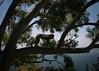 IMG_8001 (hopefuldoubtful) Tags: gibraltar barbarymacaque barbaryape