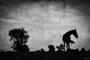 Penny on the Hill (Jen MacNeill) Tags: silhouette horse horses tree hill clouds cloudy vignette equine