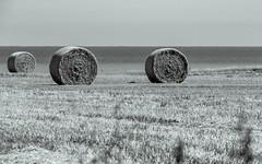 Hay Bales - Barmston (GIgaYork) Tags: 18300fx 18300mm d810 fx fxlens fullframe nikkor nikkor18300 nikon nikon18300mm nikond810 barmston eastyorkshire humberside yorkshire field fields hay corn haybales haybale bw blackandwhite blackwhite mono monochromatic