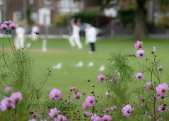 Cricket on the Green (tom ballard2009) Tags: green southwick cricket sport flowers summer players game grass sussex