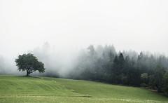 A foggy summer day (desomnis) Tags: fog mist foggy misty haze nature landscape trees tree field green natur landschaft desomnis mystic canon6d 6d canoneos6d 135mm canon135mm canon135mmf20 greenfield canon mühlviertel austria österreich oberösterreich upperaustria nebula nebel foggymood foggyatmosphere summer