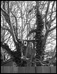 Treehouse (radspix) Tags: mamiya 645 1000s 55110mm sekor f45 bergger pancro 400 pmk pyro