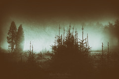 Sleeping forest (Mimadeo) Tags: fog dark darkness scary mystery forest tree trees scenic woods landscape wilderness mist misty pine pines horror shadow spooky mood moody evening rain rainy fear creepy mysterious transylvania gloomy gothic foggy norway norwegian cold desolation solitude desolate sorrow sadness nightmare grungy