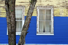 Windows on West Main Street,  Ellsworth, Maine (Spencer Means) Tags: architecture house wood wooden tree paint painted color blue yellow curtain peeling street west main ellsworth maine me us usa newengland downeast frame trim white dwwg