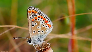 Butterfly - 3524