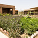 The healing garden of the Jiyan Foundation for Human Rights in Chamchamal, Kurdistan