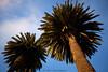 palm_L2100273 (nocklebeast) Tags: nrd santacruz woodrow palm scphoto ca usa