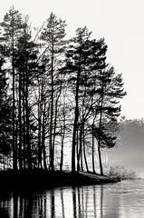 a day at the lake. Ein Tag am See (marco.federmann) Tags: see lake natur baum wasser schwarz weis