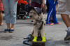 Paws and Play Dog Park at Astor Place Rest Stop (NYCDOT) Tags: citi citisummerstreets summerstreets 2017