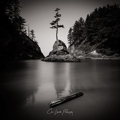 Dead Man's Cove (Chris Lakoduk) Tags: deadmanscove water coast washington state black white outdoors nature peaceful ocean beach driftwood trees mountain cove place