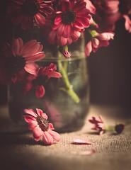 Flowers, again... (cristina.g216) Tags: flowers flores margaritas daisies bodegón stilllife cristal glass lino linen