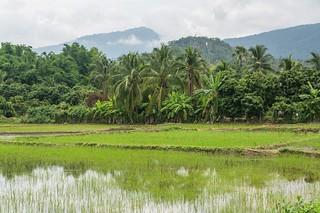 doi inthanon - thailande 62