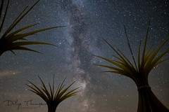 Marram Grass Magic (dilys_thompson) Tags: ngc anglesey northwales stars milkyway nightphotography astrophotography night sky nightsky fuji fujixt2
