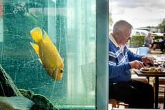 Fish On The Menu. (James- Burke) Tags: cafes candid eating fish france restaurants street humour fishtanks tropicalfish streetcolour yellow water dining fishrestaurant aquariums man maneating dinner mealtime menu
