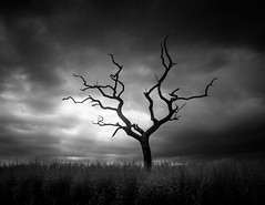 I (ghostedout) Tags: countryside monochrome natural landscape infrared monotone nature ir mono outdoors outdoor black coast suffolk white suffolkcoastaldistrict england unitedkingdom gb tree old oak ancient storm sombre dramatic reeds dark dead twisted gloomy bright cloud edgy