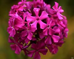 joyful (Kens images) Tags: purple flowers boquet nature scent love joy inspiration sunday walks canon texture colours plants september