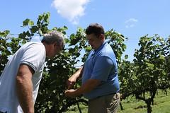 File449 (UGA CAES/Extension) Tags: grapes ugaextension cranecreekvineyards wine viticultureteam viticulture northgeorgiavineyards vineyards vines georgiawine uga