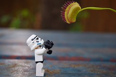 """It's a Venus Flytrap!"" (RagingPhotography) Tags: lego star wars imperial galactic empire stormtrooper storm trooper outside outdoor nature plant producer venus fly trap flytrap carnivorous photography camera plastic toy toys minifigure minifig figure ragingphotography"
