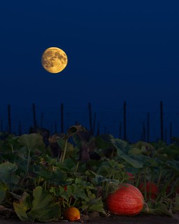 Pumpkin Patch and Moon 3739 D