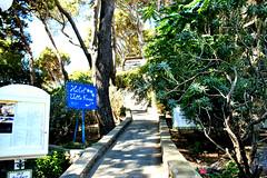 Verso i Giardini di Augusto Capri-Italy (https://travelnelmondo.blogspot.it/) Tags: giardino ciale vegetazione alberi capri