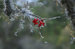 Tarde de inverno (Márcia Valle) Tags: inverno tardefria coldafternoon winterafternoon torreões juizdefora minasgerais brasil brazil márciavalle nikon coresdeinverno wintersolors tardedefrio tardedeinverno bromeliads tillandsias flores mulungu erythrina