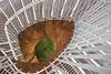 Dendrites (monilague) Tags: dendrites sculptures montréal montreal escalier stairs michel de broin building édifice boul robert bourassa