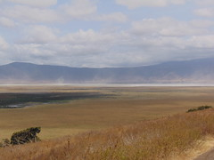 DSC00350 (francy_lioness) Tags: safari jeep animals animali ippopotami leone savana gnu elefante iena pumba tanzaniasafari ngorongorocratere gazzella antilope leonessa lioness facocero
