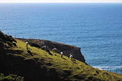 Muelle de las Almas, 17/01/2016, Chiloé - Chile (Sam Leandoer) Tags: 75300 canon animales libertad mar naturaleza chile chiloe caballos