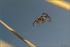 Spiderman. (Koberek@) Tags: canon 100d 55250 sulików nature dof 7dwf tree light landscape europe dolny śląsk lower silesia koberek