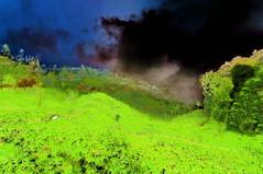 India - Kerala - Munnar - Tea Plantagen - 157bb (asienman) Tags: india kerala munnar teaplantagen asienmanphotography asienmanphotoart
