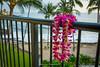 Lei on the Lanai (Mark_Aviation) Tags: lei lanai hawaiian hawaii kailua kona coast coastline pacific ocean beach blue warm sun paradise big island landscape nikon d7200