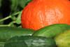 CKuchem-5697 (christine_kuchem) Tags: biogarten bioqualität ernte erntezeit garten gemüse gemüsegarten grün gurke hokaido kürbis nutzgarten pflanze sommer sorte sorten sortenvielfalt vielfalt zucchini bio biologisch frisch gesund lecker natürlich orange reif unbehandelt