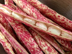 A bounty of borlotti beans.