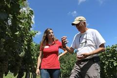 File379 (UGA CAES/Extension) Tags: grapes ugaextension cranecreekvineyards wine viticultureteam viticulture northgeorgiavineyards vineyards vines georgiawine uga